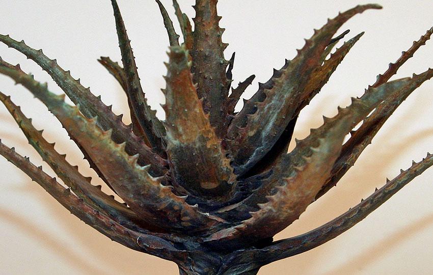 """Aloe"" Species"